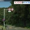 志田洋人 顔画像は?事故現場特定!イノシシとバイクが衝突する確率は?